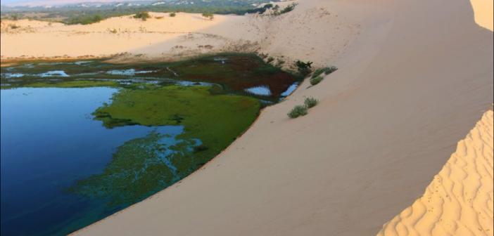 【美奈白沙丘】 一面沙漠   一面大海