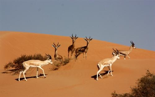 杜拜沙漠保護區國家公園