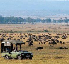 【肯尼亞 坦桑尼亞】馬賽馬拉國家公園 野生動物王國