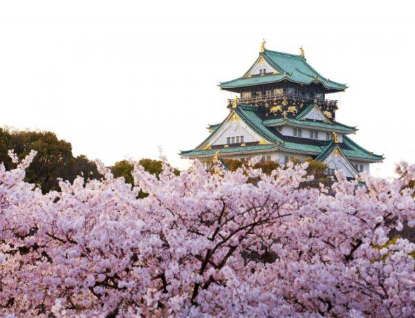 【日本 旅遊TIPS】大阪天氣懶人包 四季天氣分析+建議