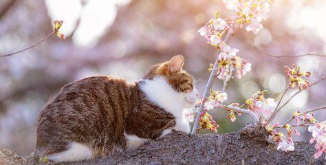 【日本貓島全攻略】私房貓島地圖,人超少、好拍照!