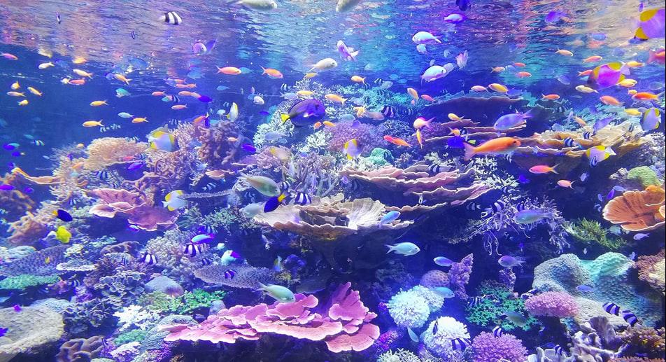 潛水課程 開放水域潛水