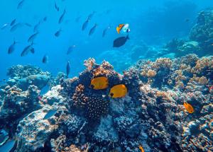 考潛水牌 地點 季節