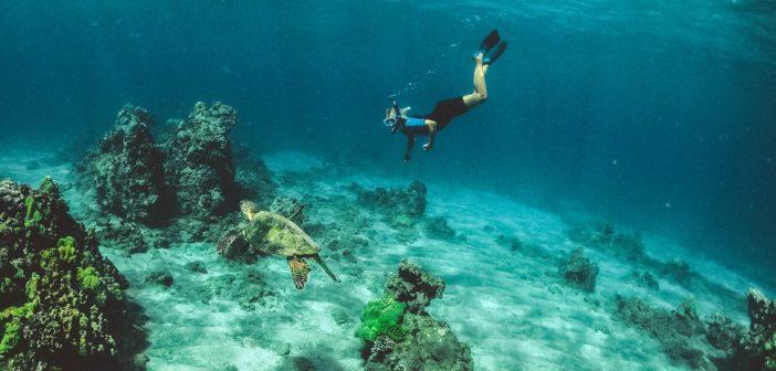 CMAS_divingcourses