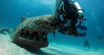 蘇梅潛水 龜島