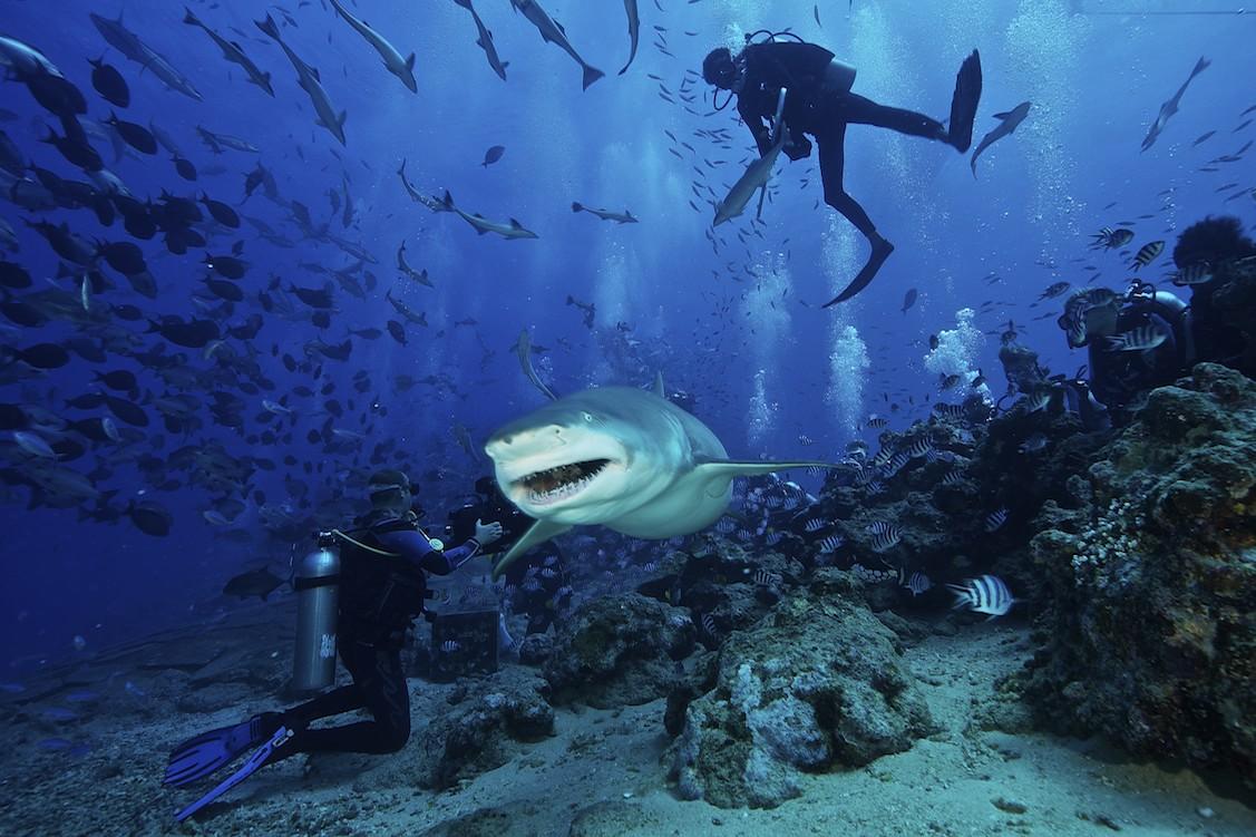 蘇梅潛水 鯊魚島