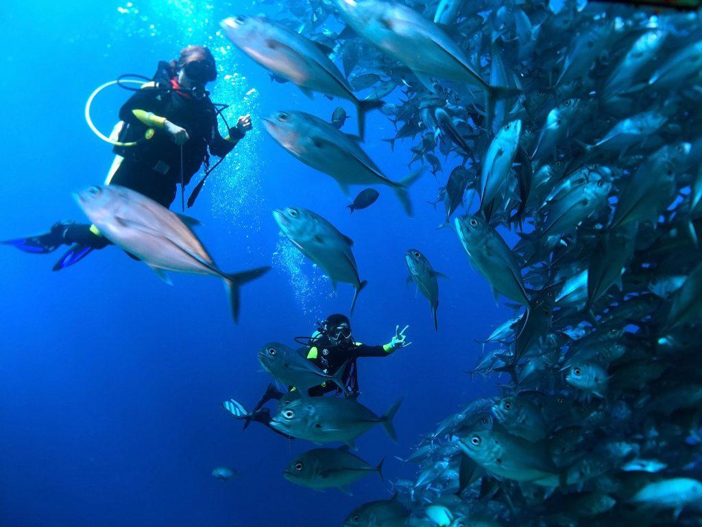 馬來西亞潛水 馬布島