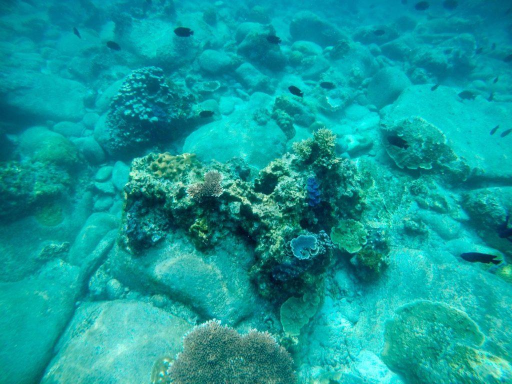 馬來西亞潛水 熱浪島