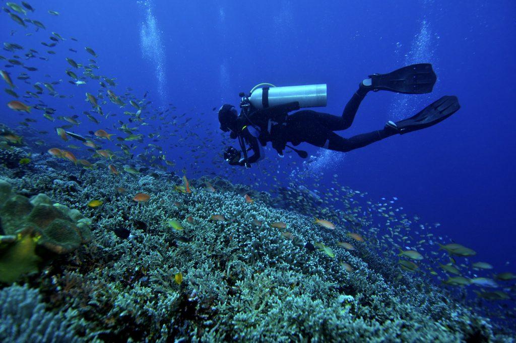 馬來西亞潛水 沙巴島