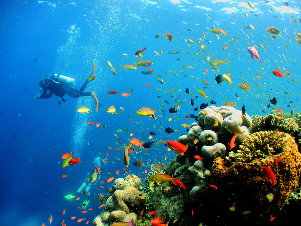 馬來西亞潛水 詩巴丹島