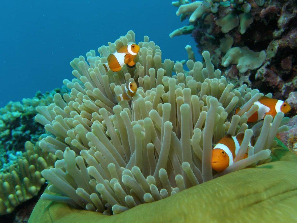 馬來西亞潛水 刁曼島