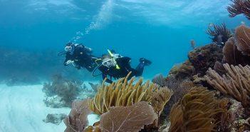 NAUI潛水 課程