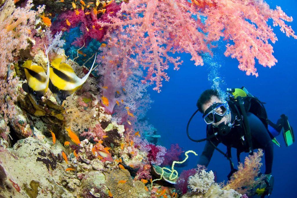 布吉潛水 安達曼海