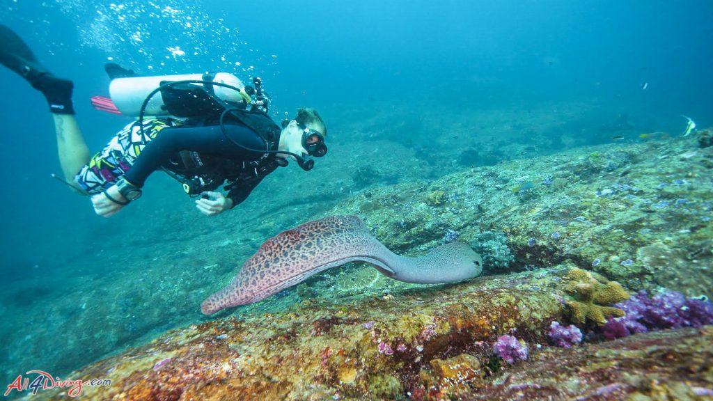 布吉潛水 皮皮島