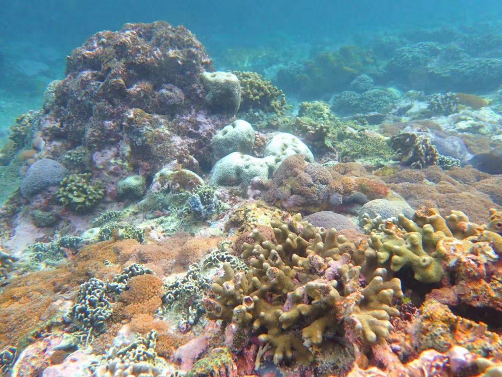 峇里潛水 帕尼達島