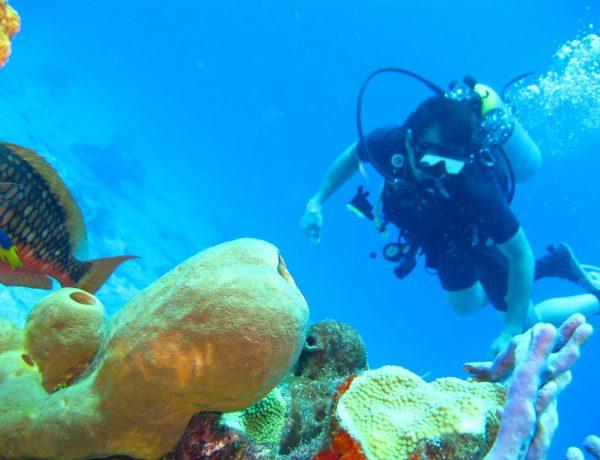 【潛水保險】去潛水旅行時應該怎樣買旅遊保險?