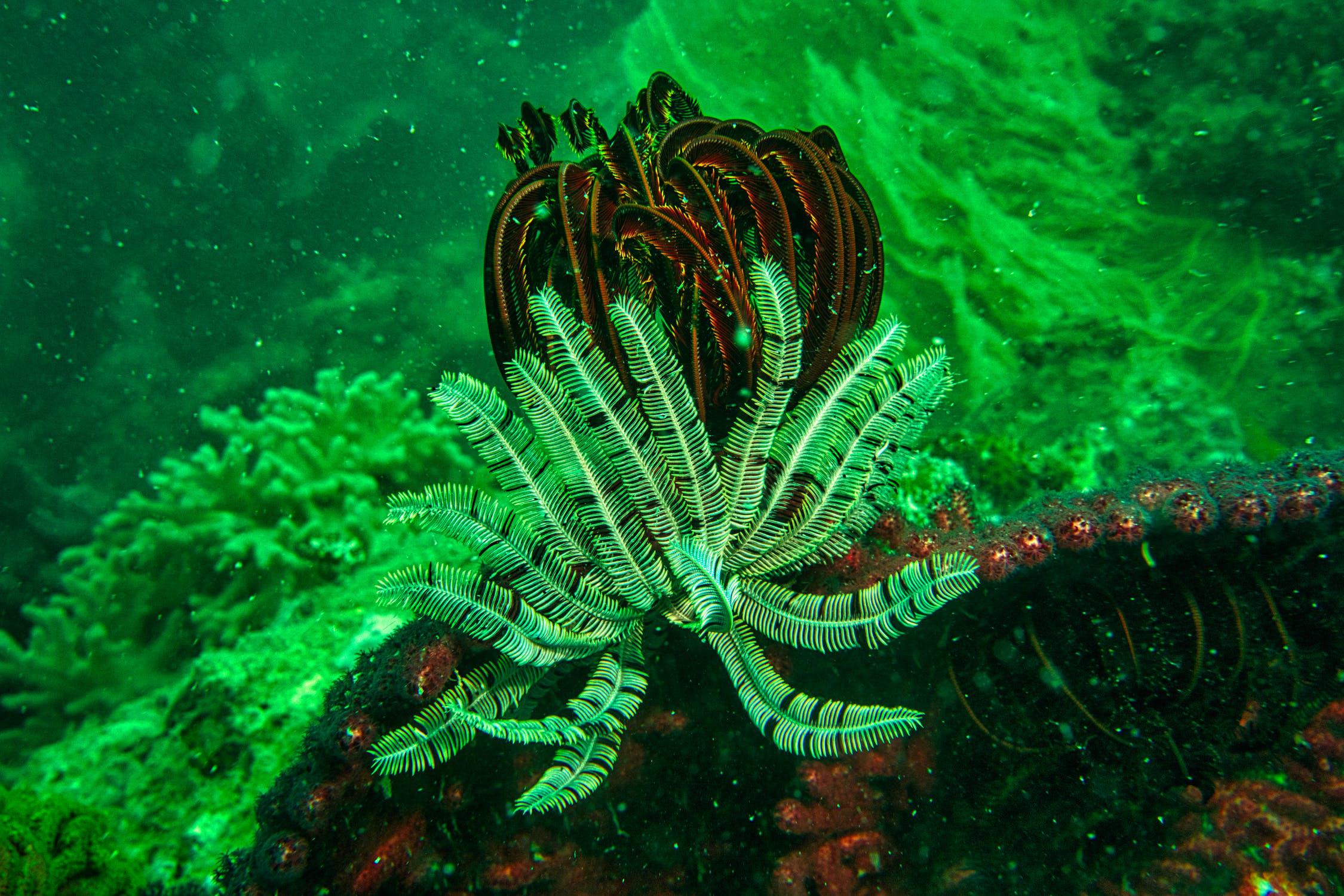 香港潛水 印洲塘