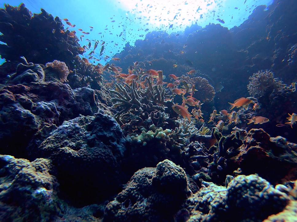 菲律賓潛水 薄荷島