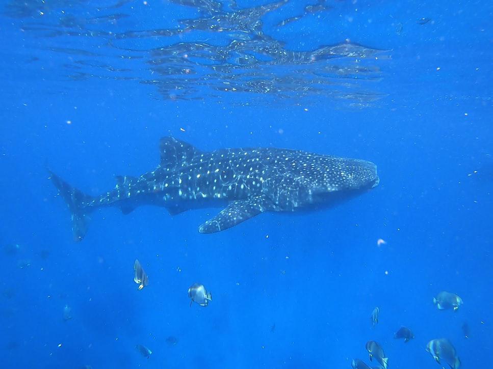 菲律賓潛水 杜馬蓋地