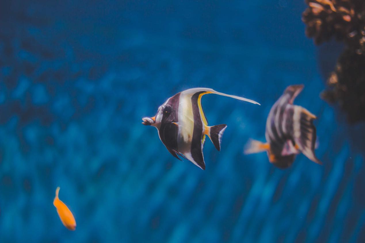 潛水攝影濾鏡 材質