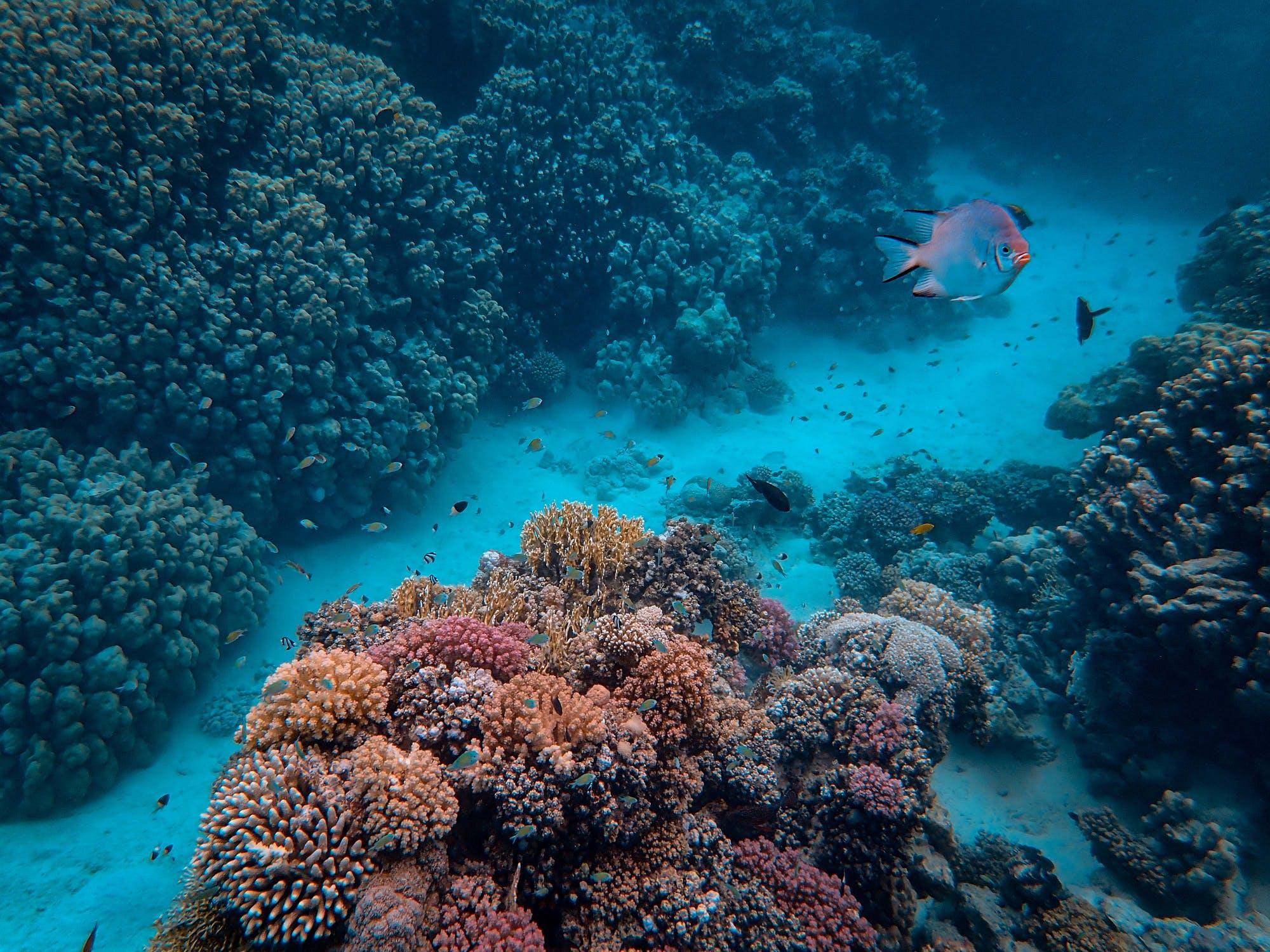 潛水旅行推薦 香港