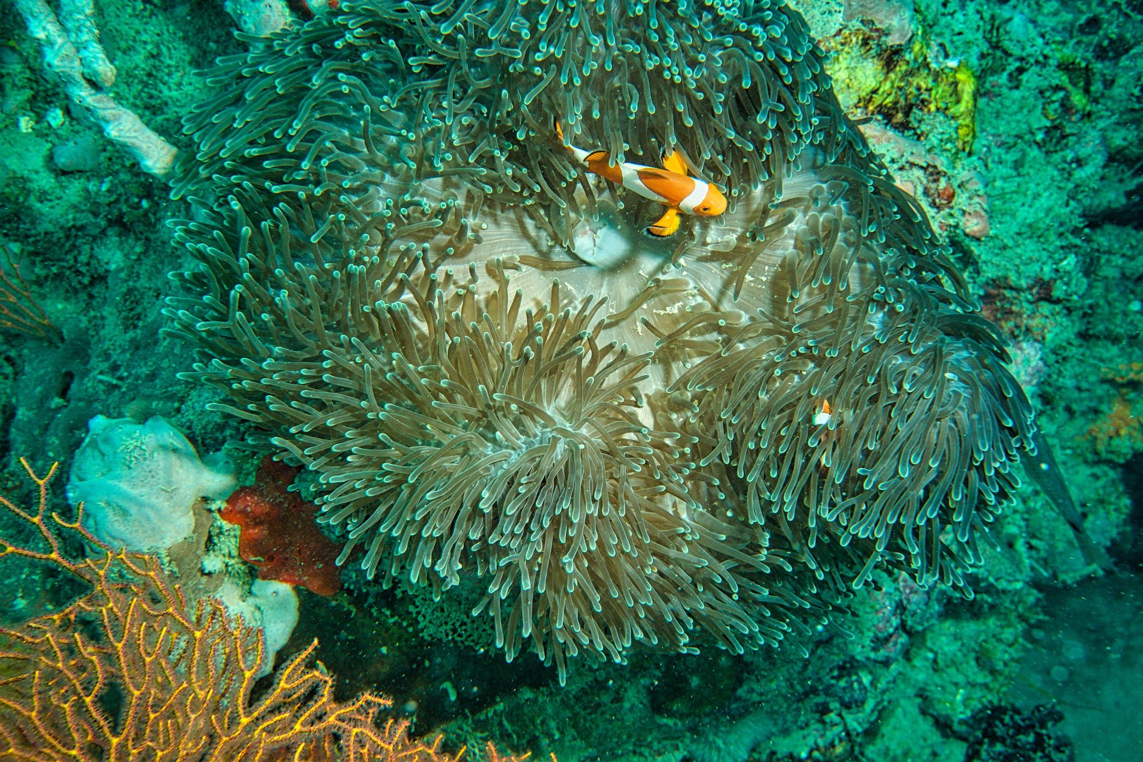 潛水旅行推薦 馬來西亞