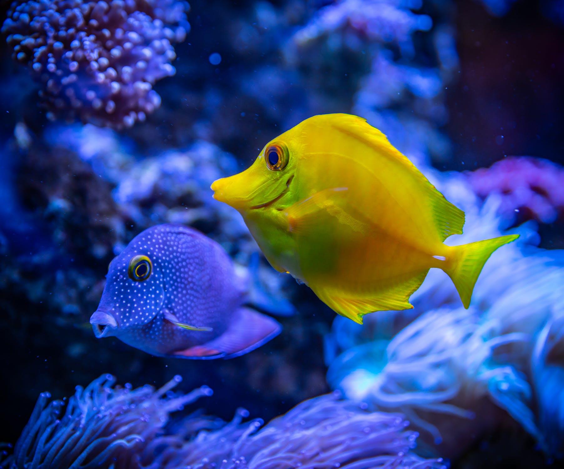 潛水旅行推薦 沖繩