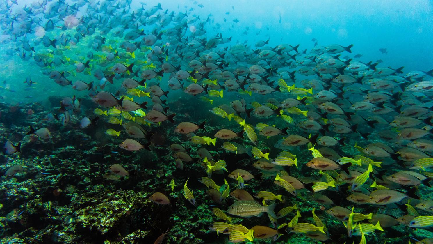 菲律賓潛水 圖巴塔哈