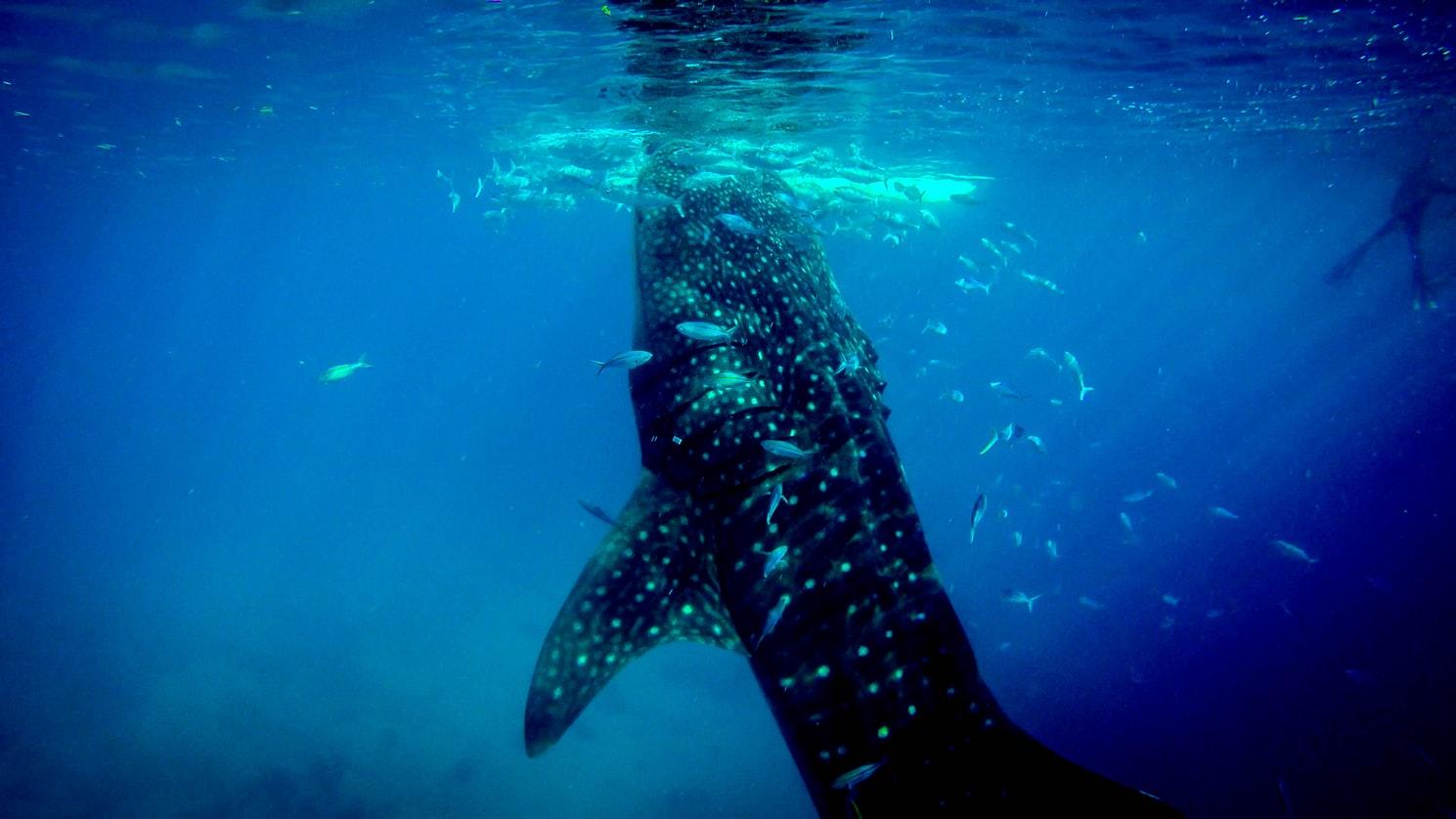 潛水旅行推薦 菲律賓