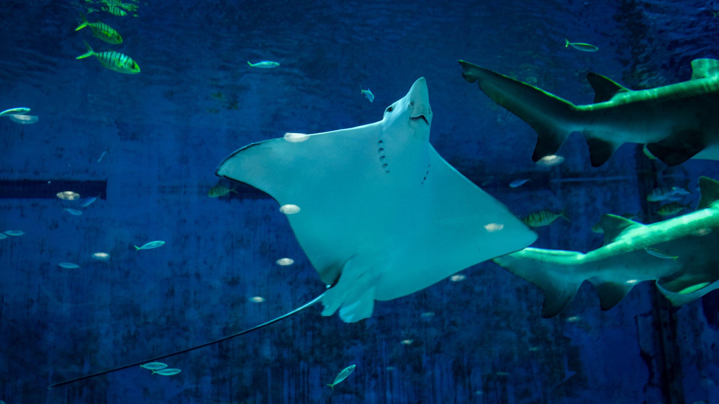 潛水旅行推薦 泰國