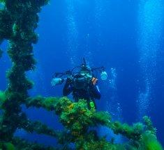 【SDI潛水】關於 SDI潛水課程 潛水新手需要了解些什麼?