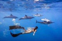 自由潛水 課程