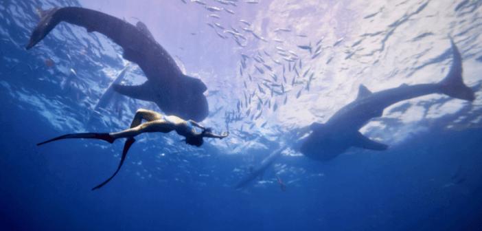 自由潛水free diving