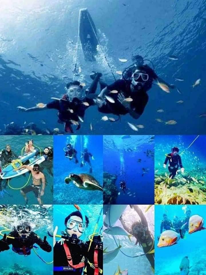 自由潛水勝地 美人魚潛水店
