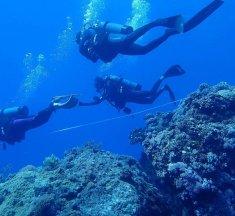綠島潛水|台灣潛水勝地!旅行潛水住宿推薦